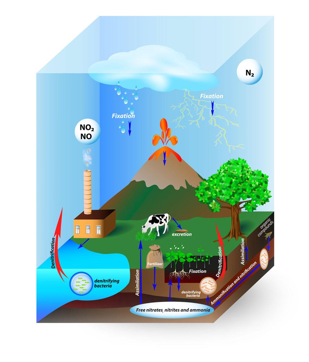 Der Kreislauf von Nitrat im Trinkwasser
